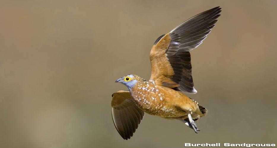 Bird Hunting in Africa