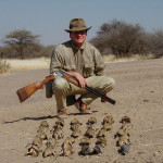 Sandgrouse and Dove Hunting