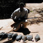 Guineafowl Hunting