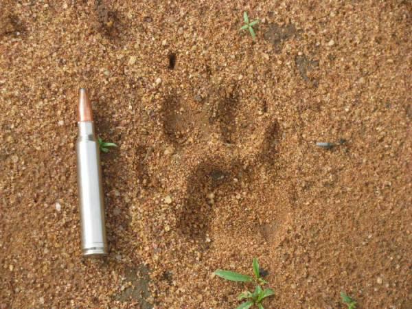Cheetah Track