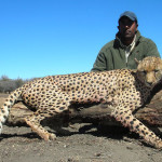 hunting-cheetah-008