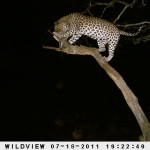 leopard-hunting-010